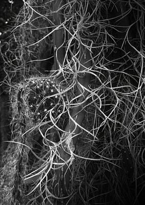 Digital Art - Entanglement by Michael Hurwitz