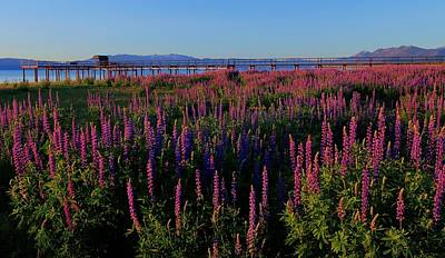 Photograph - Enter My Lupine Garden by Sean Sarsfield