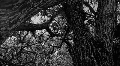 Enter The Woods In Black And White Art Print