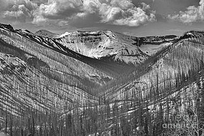Photograph - Entering Yellowstone From The East In Black And White by Nadalyn Larsen