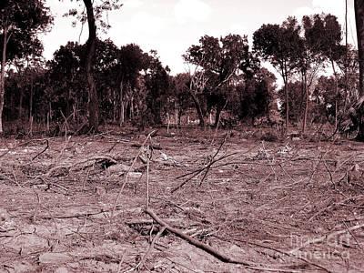 Photograph - Environmental Destruction by D Hackett