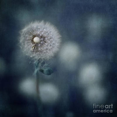 Photograph - Ephemeral by Priska Wettstein