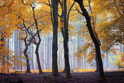 Ephemeral Treasure Art Print by Janek Sedlar