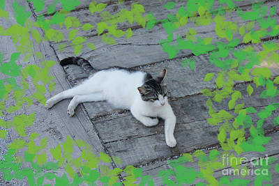 Digital Art - Ephesus Cat #2 by Donna Munro
