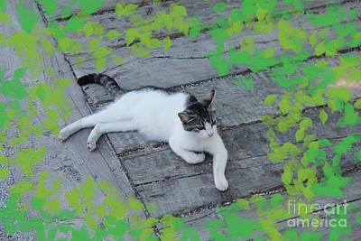 Digital Art - Ephesus Cat #2 by Donna Munro