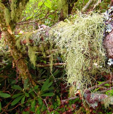 Photograph - Epiphyte Emphasis by Joshua Bales