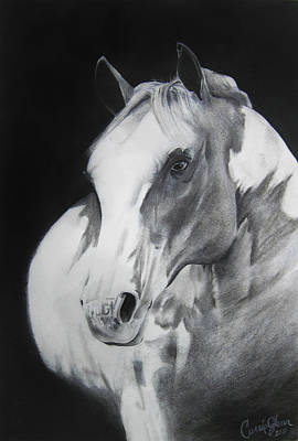 Carrie Glenn Studios Drawing - Equestrian Beauty by Carrie Jackson