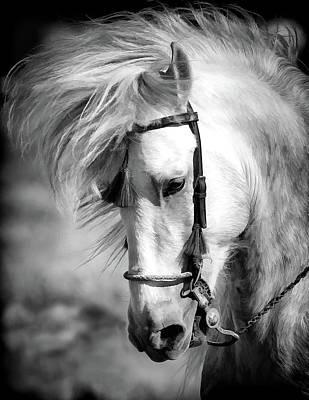 Photograph - Equestrian Hair Flip by Athena Mckinzie