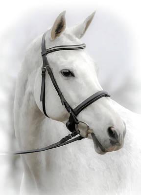 Photograph - Equestrian II by Athena Mckinzie