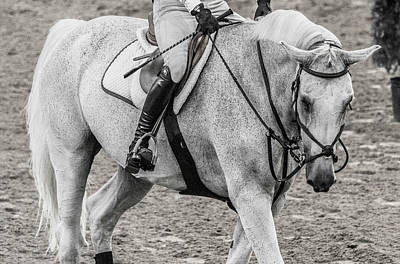 Warmblood Photograph - Equestrian The Beautiful Gray by Betsy Knapp