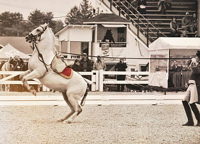 Photograph - Equine Ballet by JAMART Photography