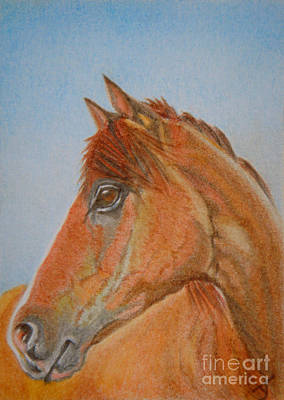 Drawing - Equine Beauty Aceo by Yvonne Johnstone