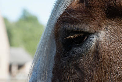 Photograph - Equine Downtime by Ed Waldrop