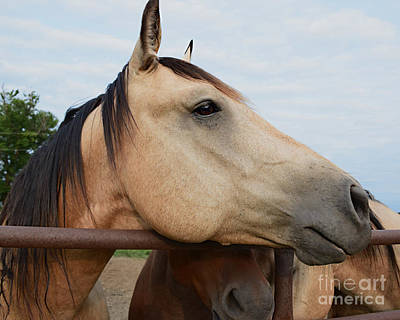 Photograph - Equine Dreaming by Kathy M Krause