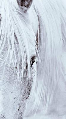 Photograph - Equine Eye by AGeekonaBike Fine