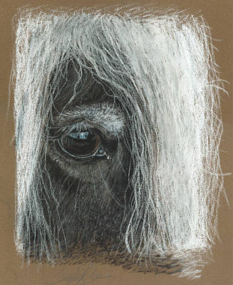 Equine Eye Detail Art Print by Terry Kirkland Cook