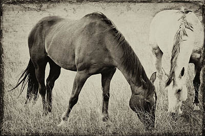 Photograph - Equine Friends Antiqued by Theresa Tahara