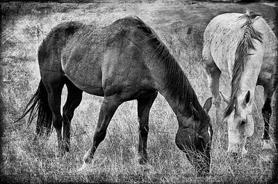 Photograph - Equine Friends Black And White by Theresa Tahara