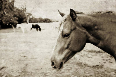 Photograph - Equine Guardian by Toni Hopper