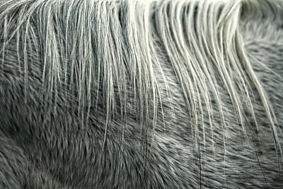 Photograph - Equine Hair by Todd Klassy