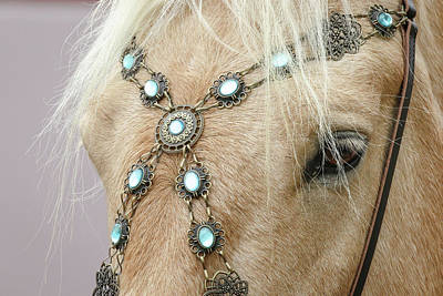 Photograph - Equine Jewels by Athena Mckinzie