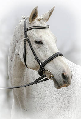 Photograph - Equine Portrait Vi by Athena Mckinzie