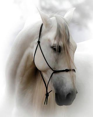 Photograph - Equine Portrait Vii by Athena Mckinzie