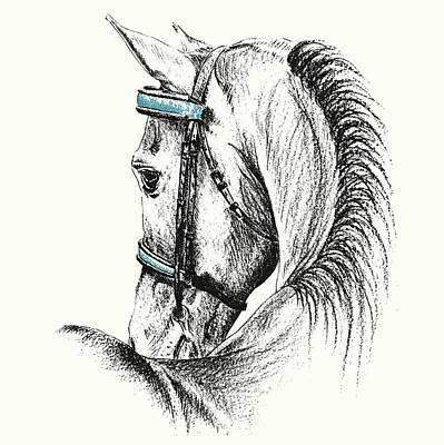Equine Sketches Art Print by JAMART Photography