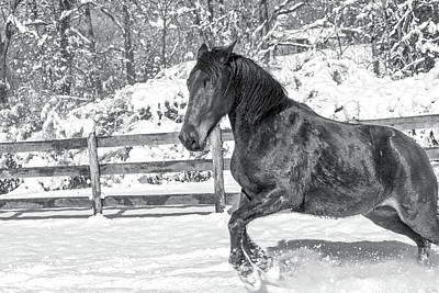 Warmblood Photograph - Equine Snowy Winter Country by Betsy Knapp