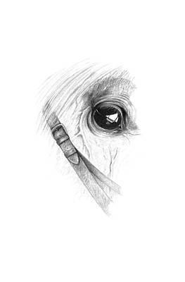 Soulful Eyes Drawing - Equine Soul by John Barnard