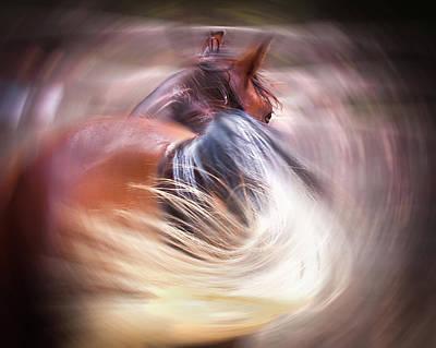Equine Photograph - Equine Wonder by Jillian Chilson