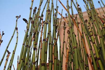 Equisetum Art Print by Jean Booth