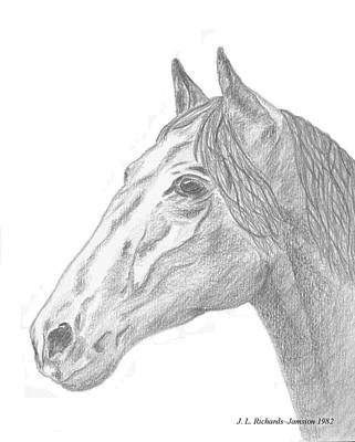 Drawing - Equus by Jennie  Richards