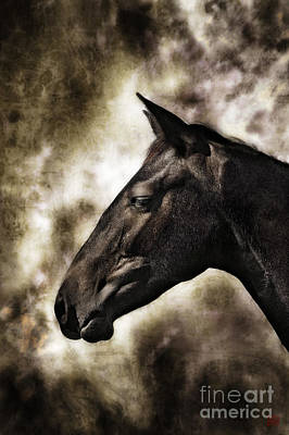 Wall Art - Photograph - Equus Lucis - Appaloosa Colt Portrait Number Two by Kent Miklenda