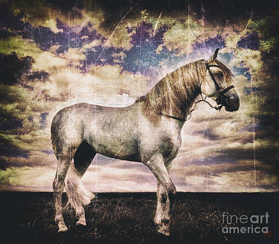 Wall Art - Photograph - Equus Lucis - Arab Stallion by Kent Miklenda