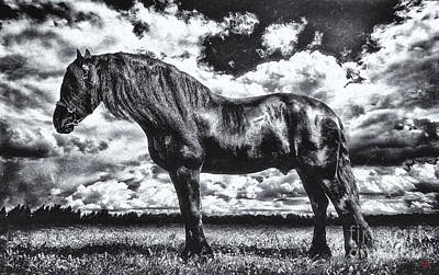 Wall Art - Photograph - Equus Lucis - Friesian Stallion by Kent Miklenda