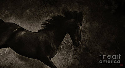 Wall Art - Photograph - Equus Lucis - Dark Horse by Kent Miklenda