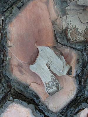 Photograph - Equus - Tree Bark Art by Robert Schaelike