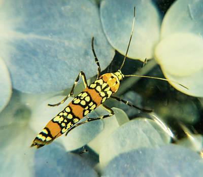 Photograph - Ermine Moth With Lovely Ermine Wings by Douglas Barnett