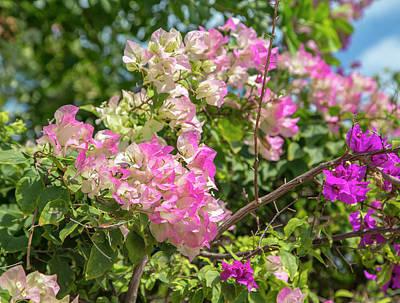 Hemingway Photograph - Ernest Hemingway Spring Flowers Key West by Betsy Knapp