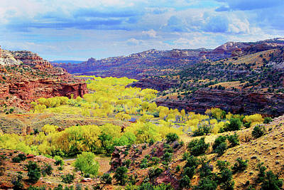 Photograph - Escalante Canyon by Frank Houck