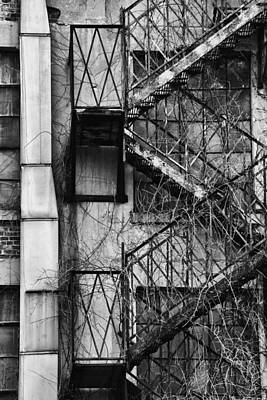 Photograph - Escape by Karol Livote