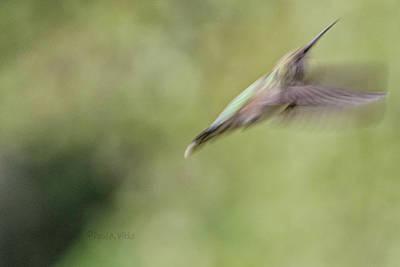 Photograph - Escape.... by Paul Vitko