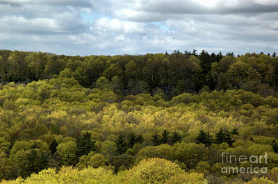 Photograph - Escarpment Spring 2 by Kathi Shotwell