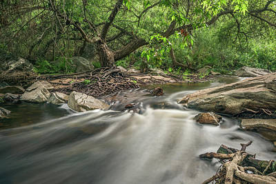 Photograph - Escondido Creek And Willow by Alexander Kunz
