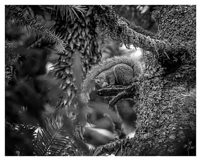 Photograph - Esquilo-campos Do Jordao-sp by Carlos Mac