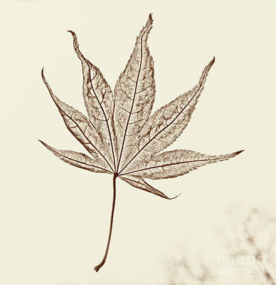 Photograph - Essence Of A Leaf by Karen Adams
