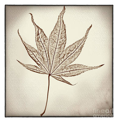 Photograph - Essence Of A Leaf With Border by Karen Adams