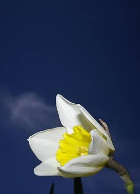 Photograph - Essence Of Spring by Richard Brookes