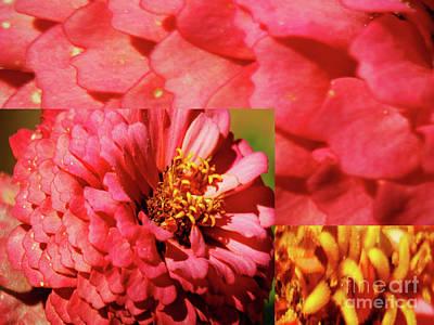 Photograph - Essence Of Zinnia Flower by Carol F Austin